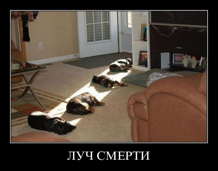 5395830_demotivators_animal_005 (700x550, 105Kb)