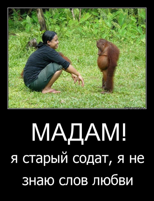 5395830_demotivators_animal_008 (538x700, 225Kb)