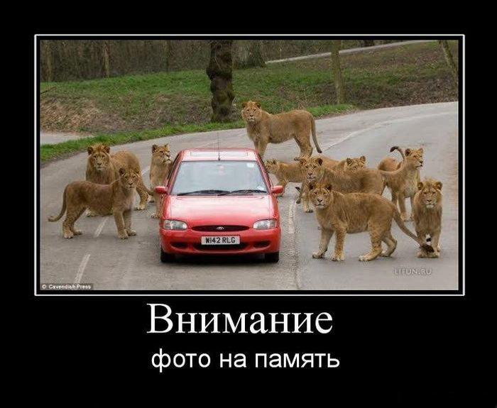 5395830_demotivators_animal_smeh_004 (700x575, 138Kb)