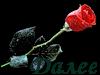 0_65b90_37081b4_XS (100x75, 7Kb)