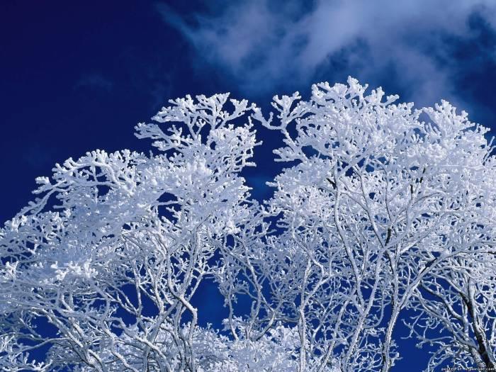 зимняя картина 8 (700x525, 389Kb)