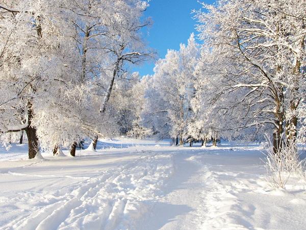 зимняя картина 12 (600x450, 387Kb)