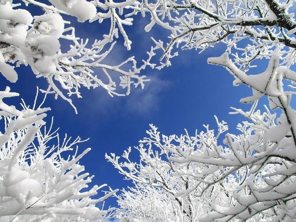 зимняя картина 14 (600x450, 352Kb)