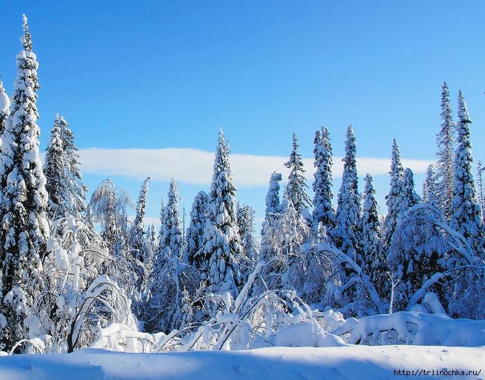Природа в ожидании Рождества!