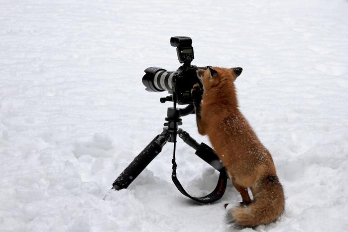 fotokameru-ukrast-popytalas-kartinki-koshki-sobaki-smeshnye-zhivotnye-kote_2513664853 (700x466, 237Kb)