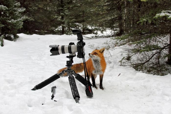 fotokameru-ukrast-popytalas-kartinki-koshki-sobaki-smeshnye-zhivotnye-kote_5016343040 (700x466, 322Kb)