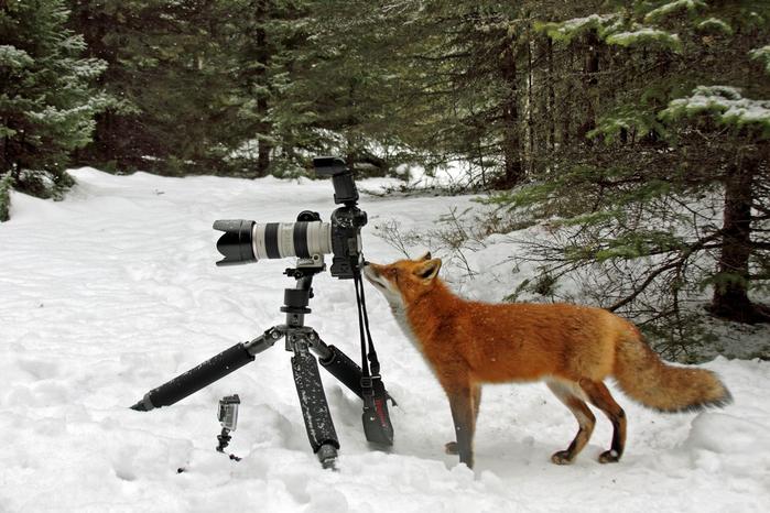 fotokameru-ukrast-popytalas-kartinki-koshki-sobaki-smeshnye-zhivotnye-kote_7821118484 (700x466, 351Kb)