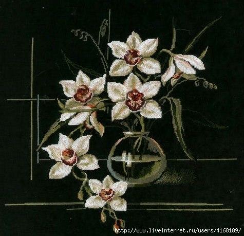 Орхидеи на черном фоне.