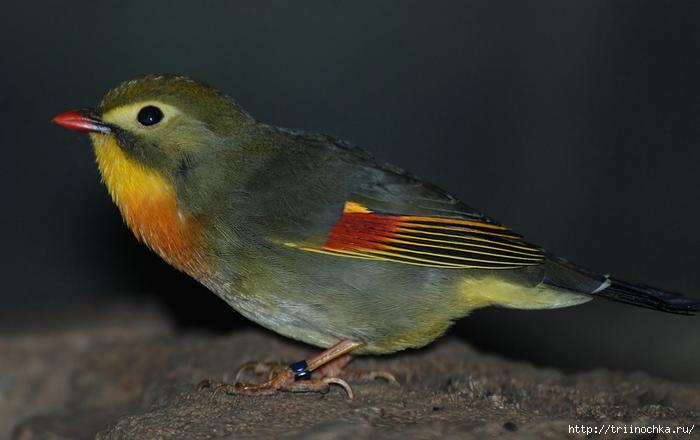 Птичий мир и его разнообразие!