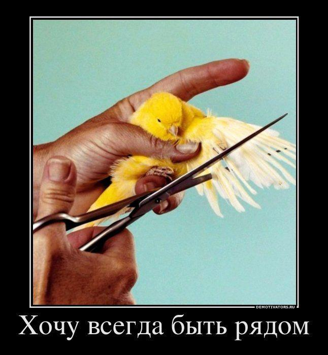 http://img0.liveinternet.ru/images/attach/c/10/108/874/108874194_large_Demotivators_16.jpg