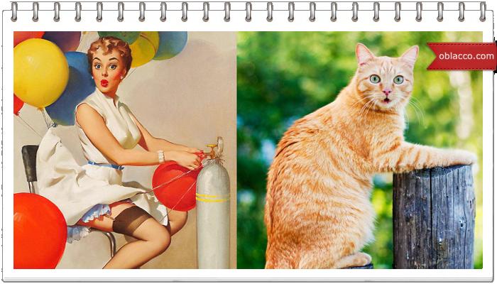 Женщины как кошки/3518263_kosha (700x400, 461Kb)
