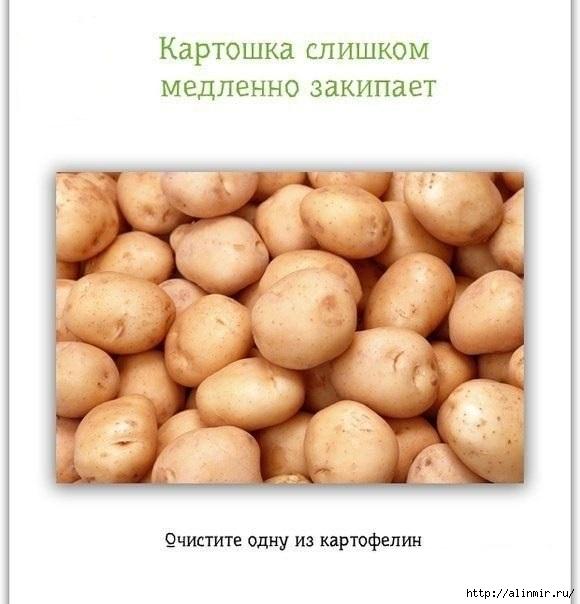 маленькие хитрости картофель (580x604, 124Kb)