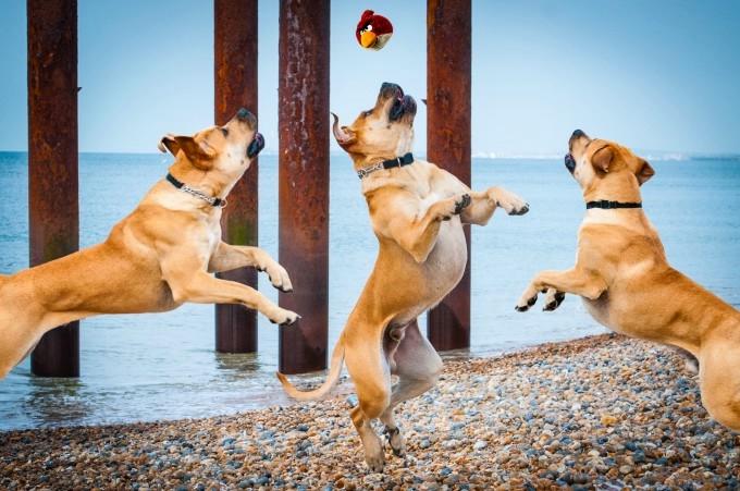 прикольные фото собак 1 (680x451, 209Kb)