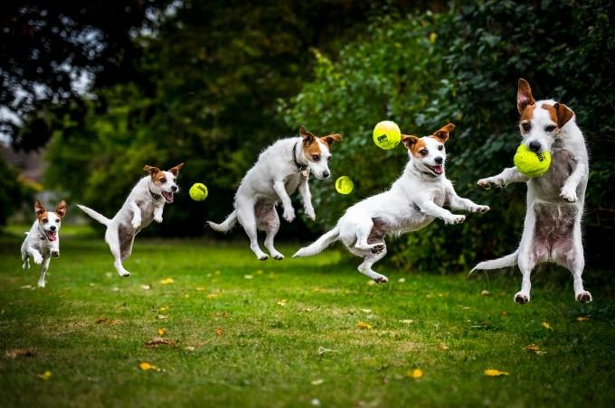 прикольные фото собак 3 (680x452, 189Kb)
