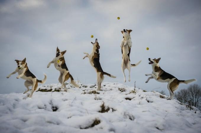 прикольные фото собак 5 (680x452, 86Kb)
