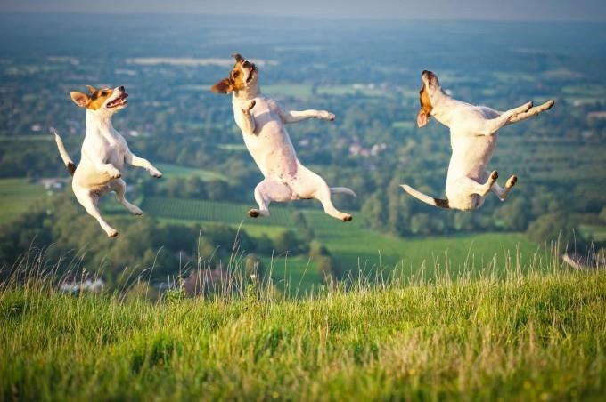 прикольные фото собак 7 (680x452, 169Kb)