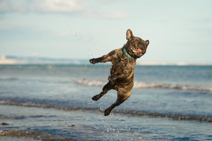 прикольные фото собак 11 (680x452, 99Kb)
