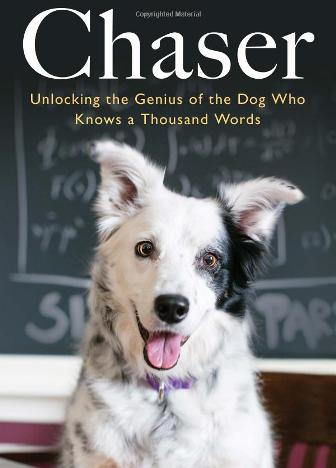 Пёс Чейсер - понимает слова 1 (336x468, 23Kb)