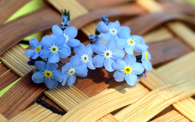 цветы и корзина 1 (620x390, 253Kb)