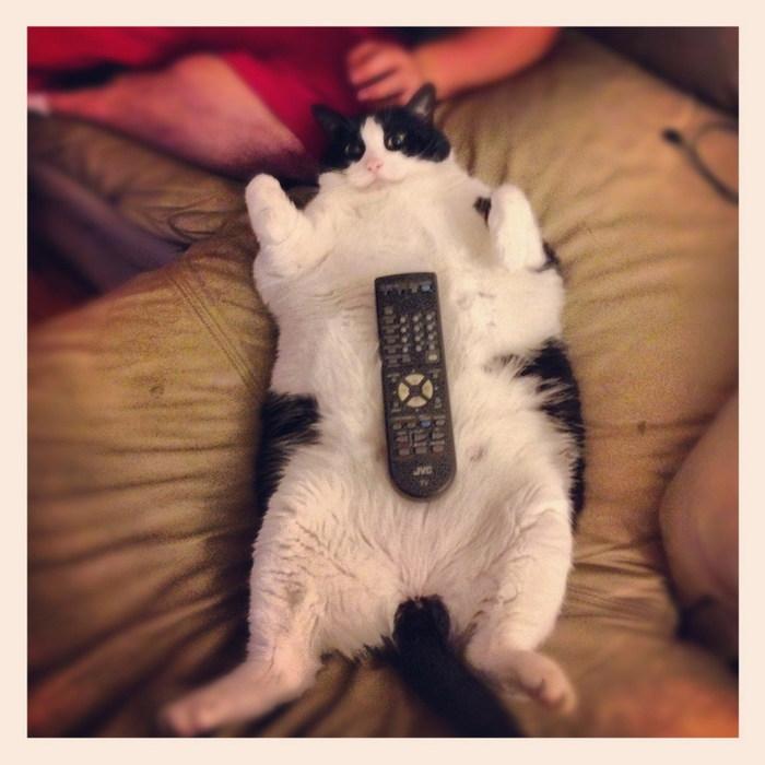 funny_animals_02136_002 (700x700, 88Kb)