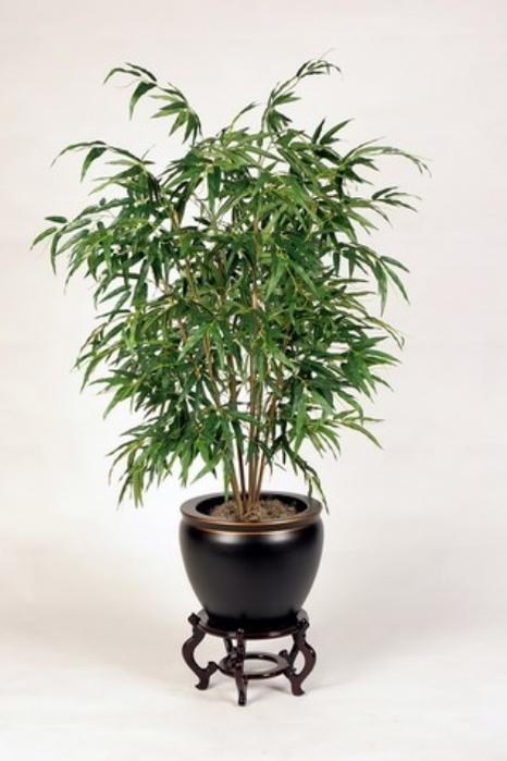 бамбуковая пальма (400x600, 160Kb)