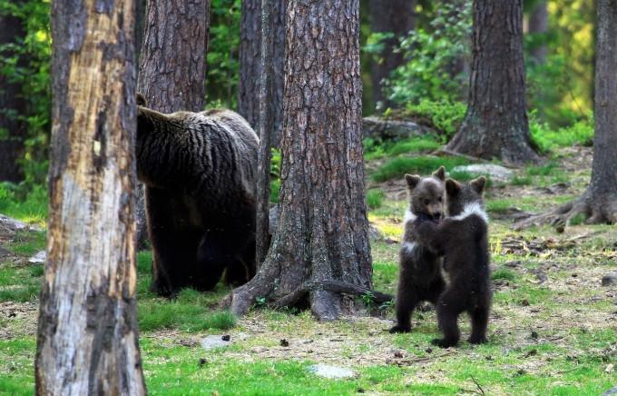 медвежата фото 6 (680x436, 267Kb)