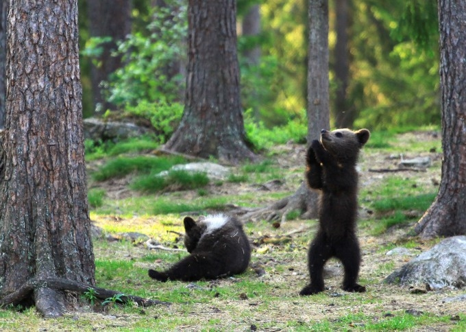 медвежата фото 8 (680x484, 263Kb)