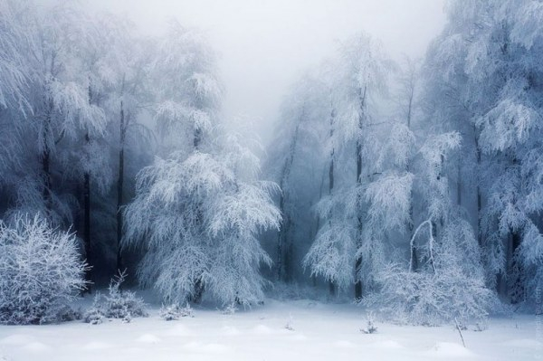 beautiful winter landscape (600x399, 168Kb)
