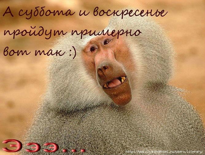 обезьяна (668x505, 310Kb)