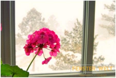 1390151399_geran_snow_window_pasternak (450x302, 60Kb)