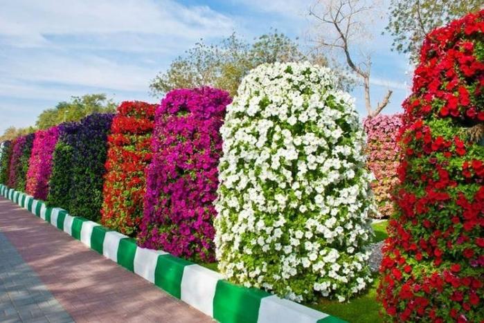 Цветы садовые их дизайн