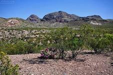пустыня (226x150, 35Kb)
