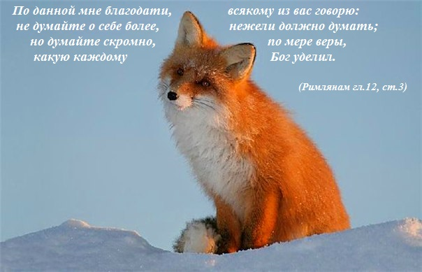 proxy.imgsmail.ru.jpg1 (604x389, 58Kb)