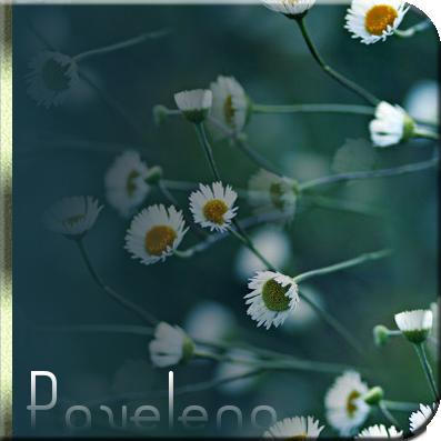 5306743_daisy1181 (397x397, 202Kb)