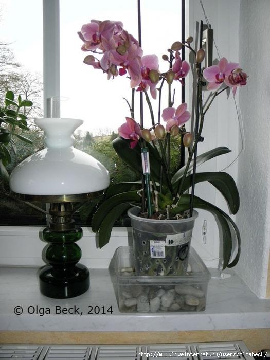 Цветы в квартире вянут цветы