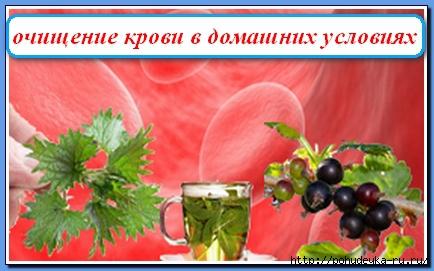 3925073_1382166073_ochischeniekrovivdomashnihusloviyah (434x271, 101Kb)