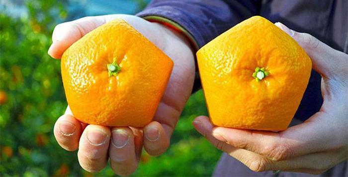 пятиугольные японские апельсины (700x357, 229Kb)