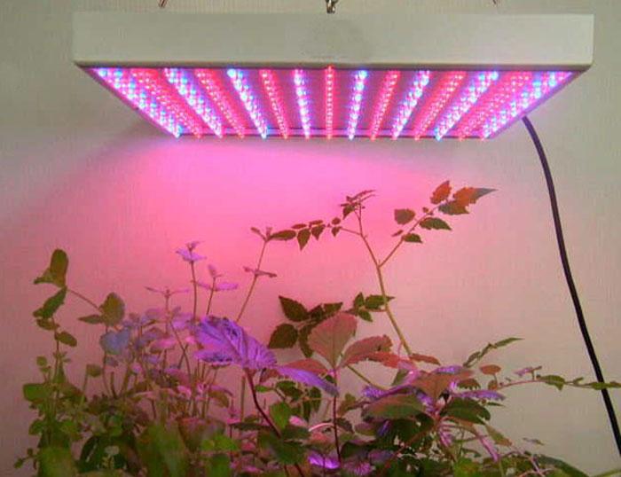 Свет для выращивания растений
