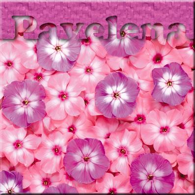 5306743_Nature_Flowers_Flowe (397x397, 214Kb)