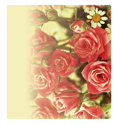 борд-роза-обр (368x400, 236Kb)