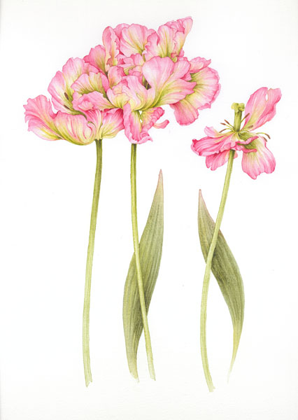 1306344709_www.nevsepic.com.ua_006-parrot_tulips_st_6_finished_copy (426x600, 120Kb)