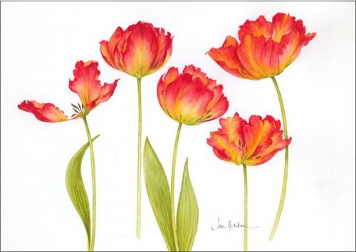 1306344724_www.nevsepic.com.ua_004-tulips_red__yellow_72__st.copy (500x354, 139Kb)