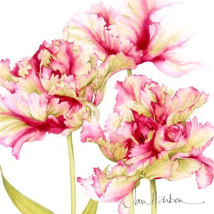 1306344748_www.nevsepic.com.ua_000-jh_45_parrot_tulips_ii__web_copy (424x425, 194Kb)