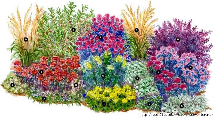 схема размещения растений на