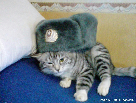 коты (5) (480x361, 141Kb)