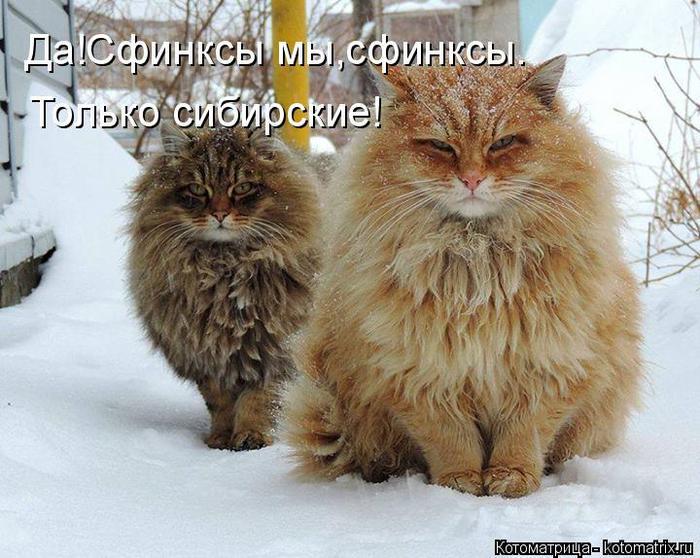 kotomatritsa_B (700x558, 73Kb)