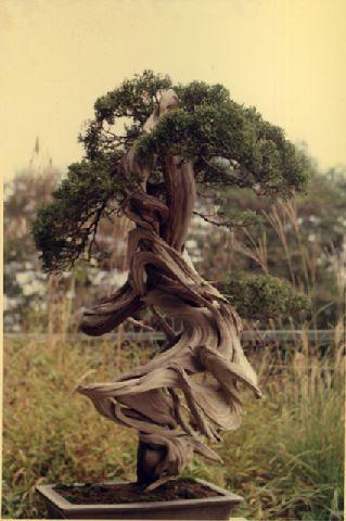 дерево (319x480, 122Kb)