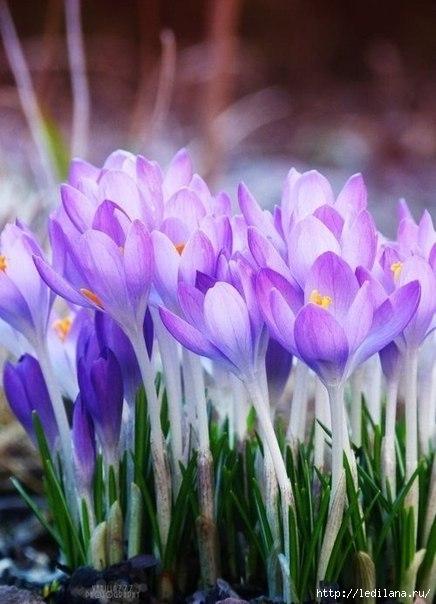 красота цветов2 (436x604, 145Kb)
