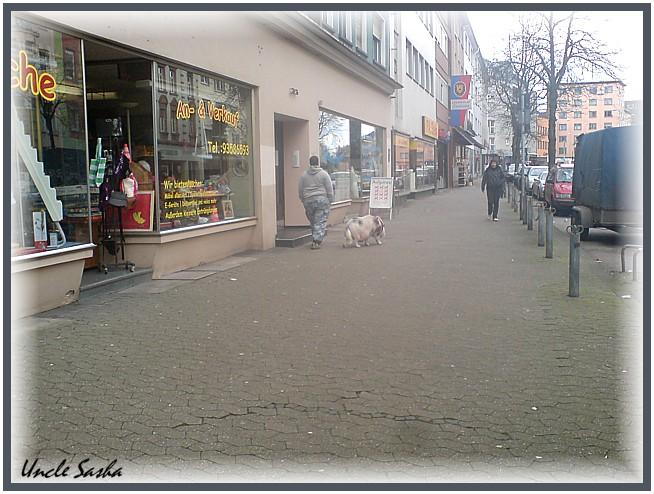 Schwein1 (654x494, 109Kb)