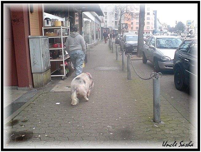 Schwein3 (654x494, 105Kb)